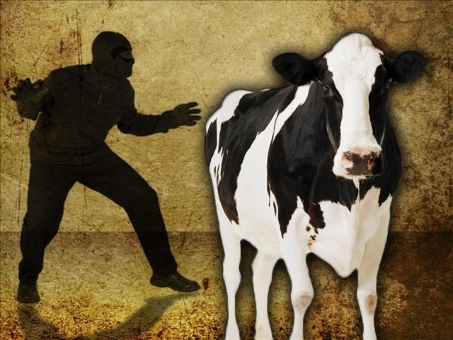 На Херсонщині у жінки викрали двох корів, які знаходилися у неї в дворі