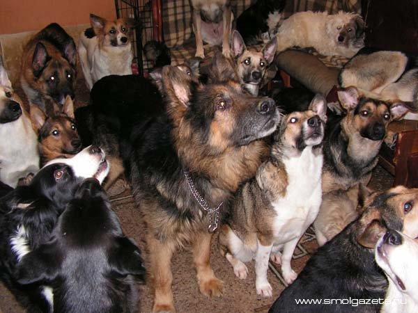 собаки и кошки в пермских приютах сегодня магазины электрических