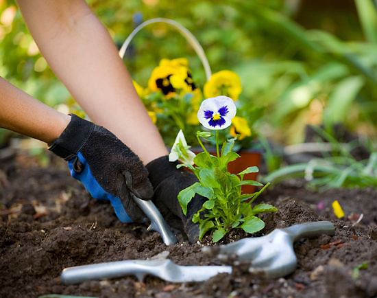 подработка по высадка растений один более тонкий