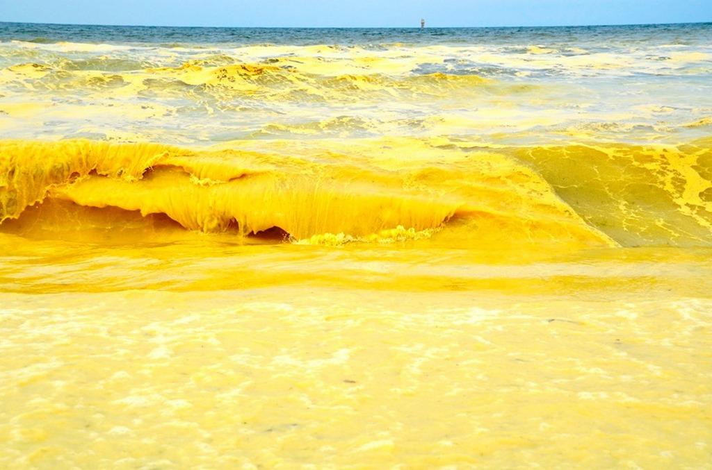 желтое море фото отзывы