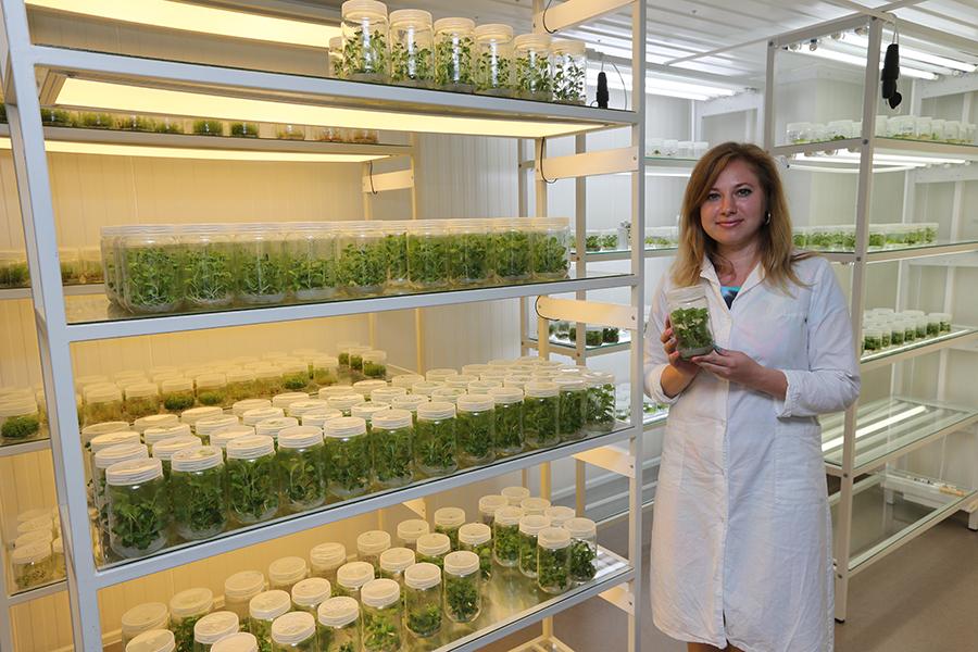 Селекционный институт купить цветы