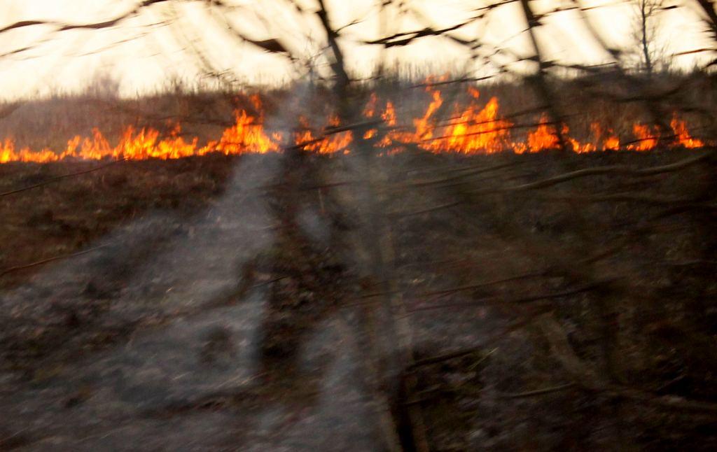 Сухие поля горят по всей Калининградской области (карта)