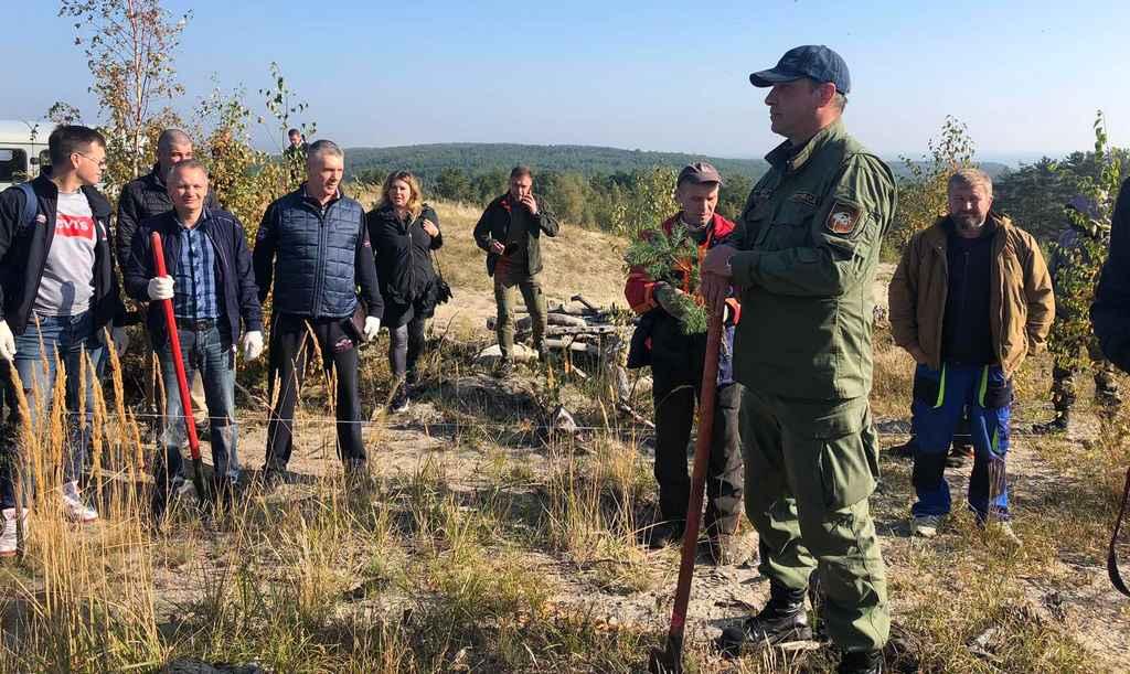 Куршская коса: на месте пожара высадили саженцы 1200 сосен и кустарника