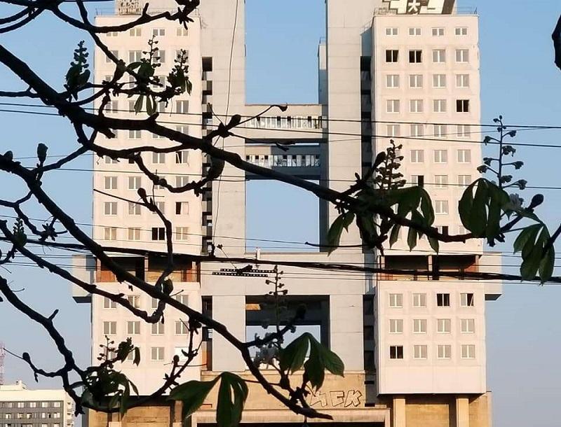 В Калининграде осенью зацвёл каштан (фото)