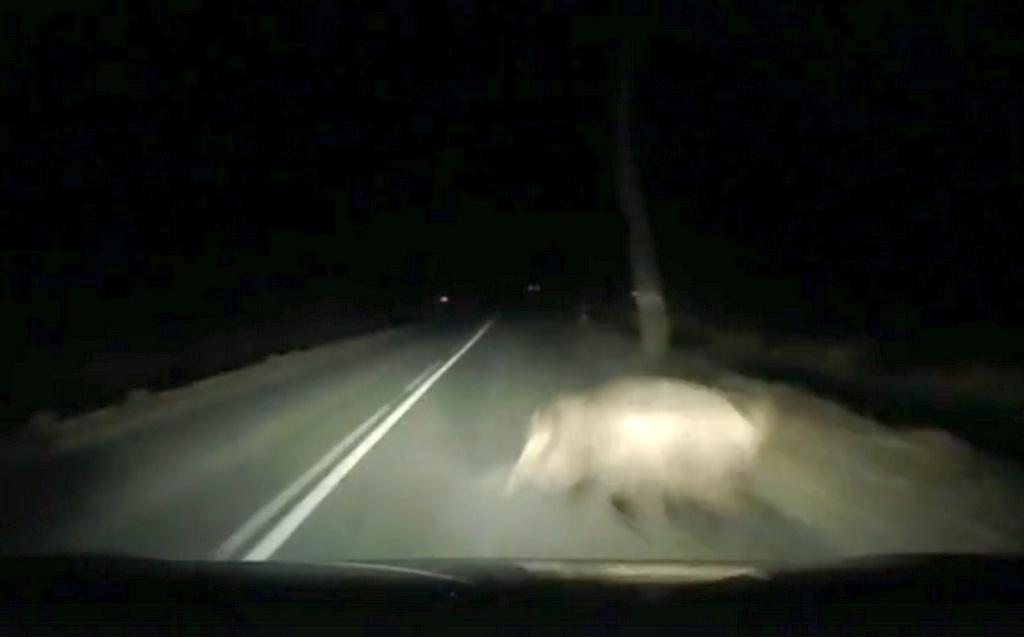 Появилось видео столкновения с кабаном по дороге на Зеленоградск со стороны Романово