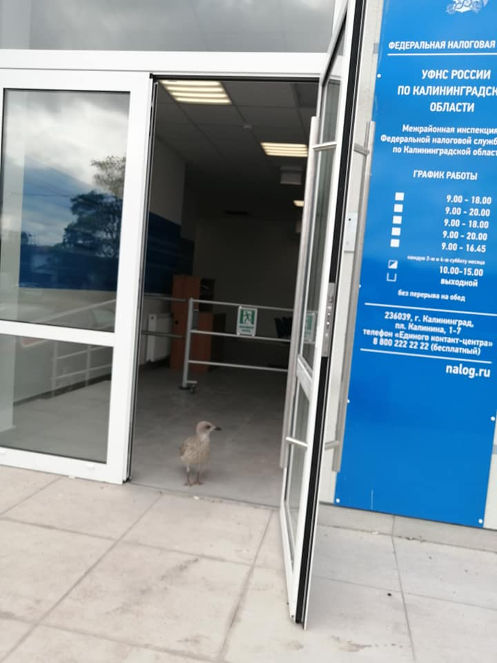 Птица в налоговой 2.jpg